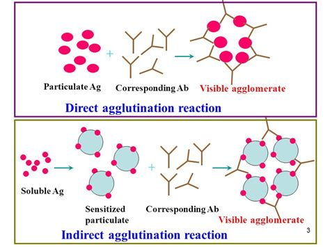 reaction test agglutination reaction ppt