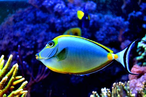 colorful fish colorful tropical colourful fish colorful fish in the