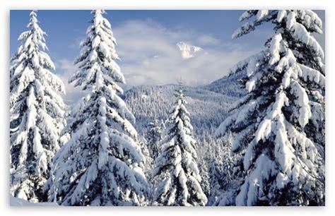 snowy trees  hd desktop wallpaper   ultra hd tv