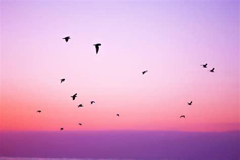 imagenes tumblr libertad fondo de pantalla de p 225 jaros cielo libertad rosa
