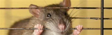 wohnung trotz mietschulden abmahnung wegen tierhaltung vorlage tipps f 252 r vermieter