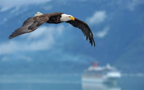 imagenes animales aves animales aves naturaleza de las 225 guilas de fondo de
