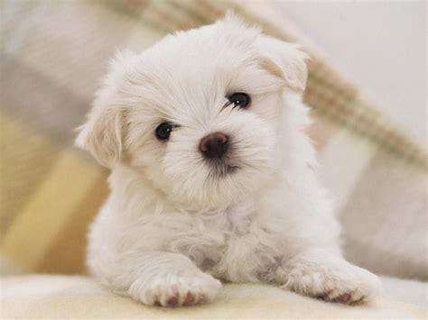 wallpaper anjing lucu  menggemaskan deloiz wallpaper