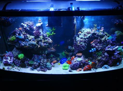 Reef Aquascape by Top Reef Tank Aquascapes New Pic Of 72 Bowfront New Aquascape New Lights New Ballast