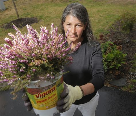 maine retailers phasing out some pesticides concerns