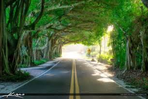 Calming Colors banyan tree covered road stuart florida