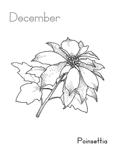 poinsettia leaves coloring pages 86 poinsettia coloring pages flower coloring page
