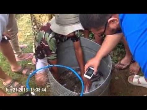 lele ras lele sistem resirkulasi hp terbaru 2015 budidaya lele sangkuriang organik 6 doovi