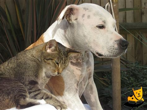 pictures of dogs and cats staffordshire bull terrier 171 and pet photos of dogs cats kittens