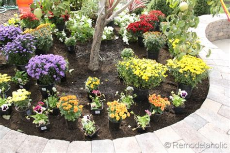 when to plant a fall garden planting fall flowers