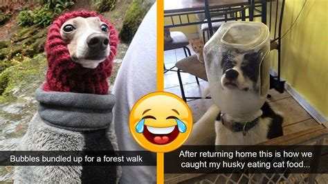 funny  cute dog snapchats   impawsible