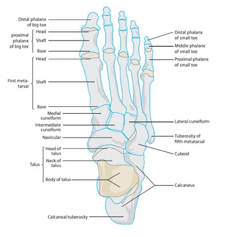 small bones what to do with a broken toe symptoms and treatment