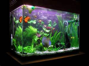 Types Of Aquarium by Types Of Freshwater Aquarium Fish Pictures Images