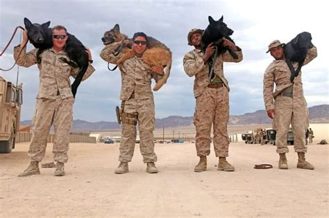by laws young marines 143 best images about german shepherd dog k 9