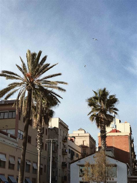 Zeitlose Motive 4987 by Barcelona Neues Jahr Neues Food Nwlife