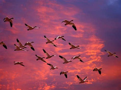 imagenes de karma bird fly 日本著名风景画家东山魁夷作品