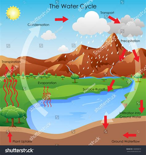 diagram to show evaporation vector illustration diagram showing water cycle stock