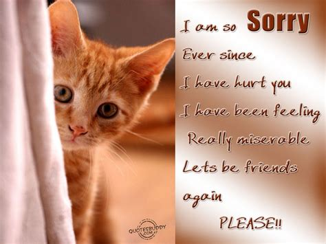 sorry quotes im sorry i hurt you quotes quotesgram