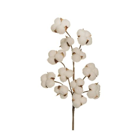 fiori di cotone cotone spray 72cm co5 50 80 227386 piante e fiori