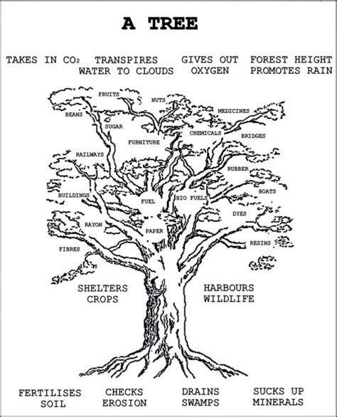 parts of a tree diagram woodcroft wildspace tree diagram