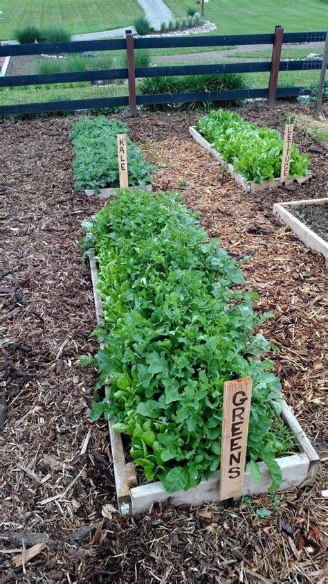 insect repellent for vegetable garden best 25 garden weeds ideas on beginner