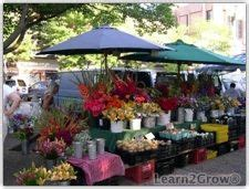 Fresh Cut Flower Preservative by Keeping Farmer S Market Flowers Fresh Without The