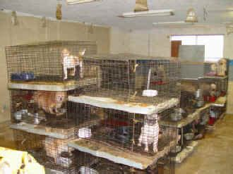 puppy mills in pa governor signs pa puppy mill bill animal coalition