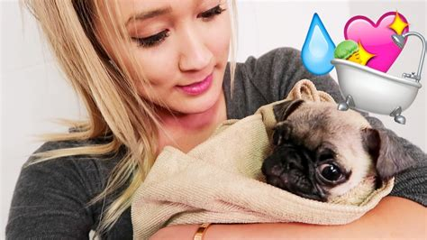 pug puppy bath youtuber gives pug his bath and his response is not as anyone would