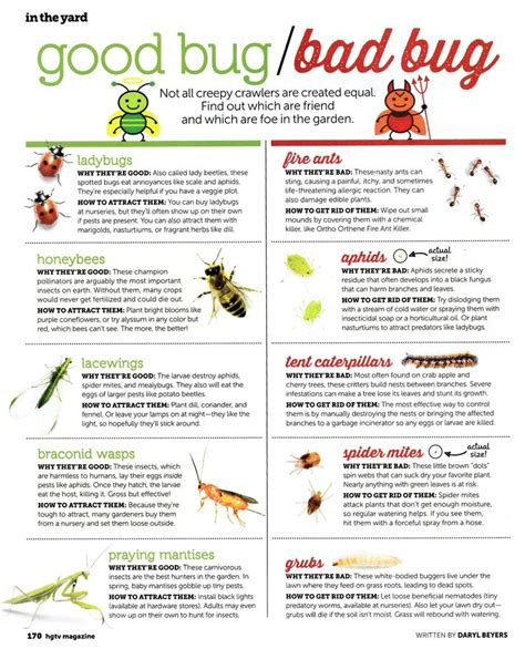 what s good for bed bugs good bug bad bug gardening pinterest