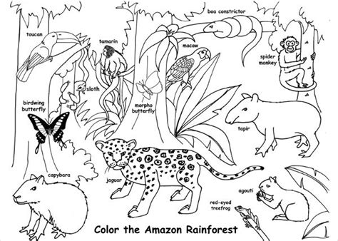 jungle habitat coloring page 88 coloring page of red eyed tree frog click new
