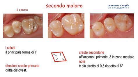 tavole anatomia tavole anatomia laboratorio odontotecnico leonardo colella