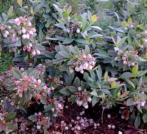 Blueberry Garden by Blueberry Garden Edible Walls