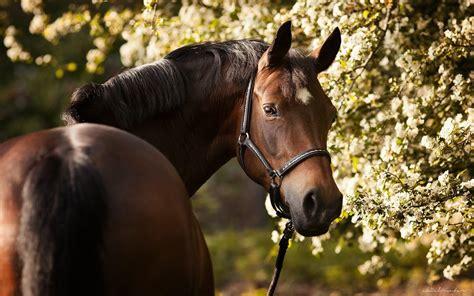 wallpaper hd 1920x1080 horses brown horse hd desktop wallpaper 2880x1800 wallpapers13 com