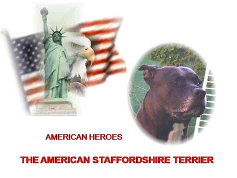 Sergeant Stubby Powerpoint The American Staffordshire Terrier Authorstream