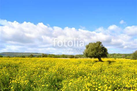 immagini prato fiorito quot panorama con prato fiorito albero di ulivo quot immagini e