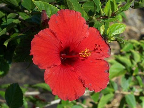 which state has a hibiscus state flower for puerto rico puerto rico state flower