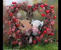 Cute Animal Valentines Day Wallpaper 1000  Images About Awesome X3cb
