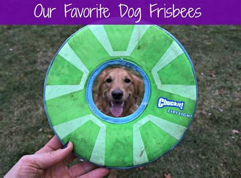 best frisbees the best frisbees for dogs according to