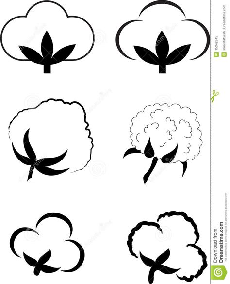 Cotton Gossypium Stock Vector Image Of Gossypium 15342845 Ancestry Stock Images Royalty Free Images Vectors