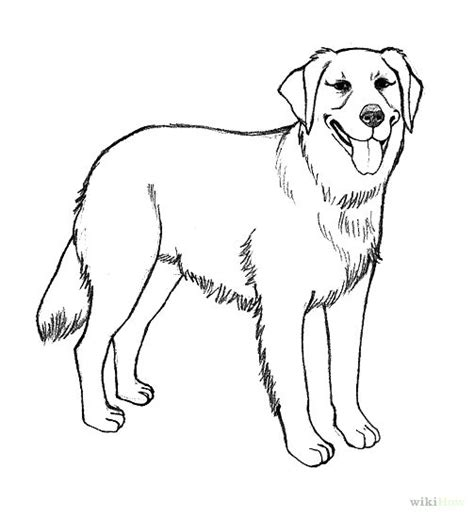 how to draw a golden retriever easy realistic golden retriever coloring pages how to draw a golden retriever 7 steps with