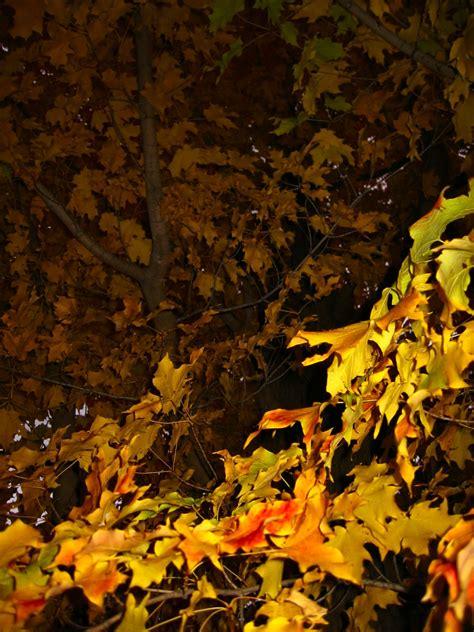 soul amp autumn maple leaves mellow autumn rain tune