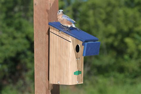 where to place bluebird house best 28 where to place bluebird house bluebird manor house yard envy three