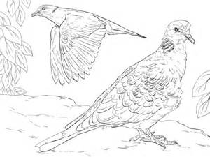 turtle dove coloring page turtle doves coloring page free printable coloring pages