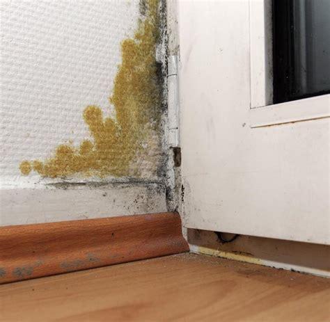 schimmel inder wohnung mykotoxine versteckter schimmelpilz kann bewohner krank