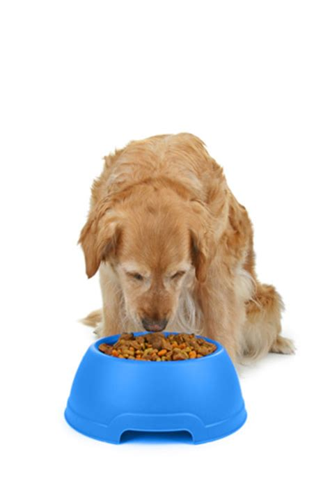 dog eating from bowl types of dog food pfma