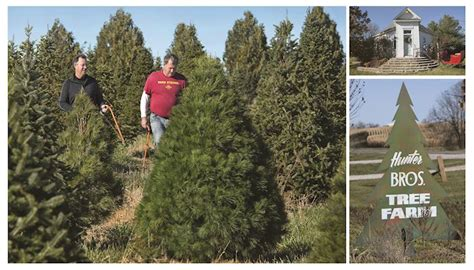 it s christmas tree time at the hunter farm