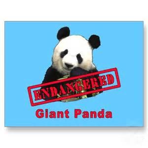 Backyard Wild Animals Endangered Species Pandas Zoo Animals