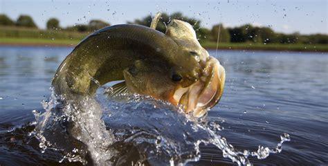 Bass Fisch by Bass Fishing Thornleys Guest House