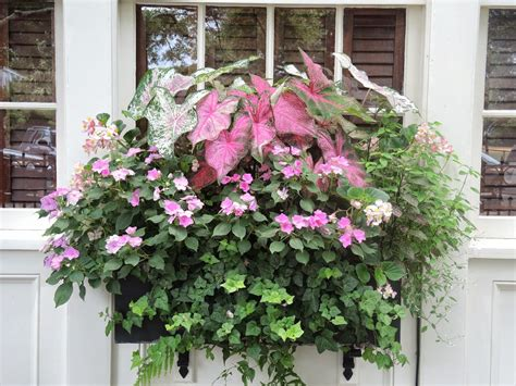 window box ideas for shade flower window box planter for shade pink and green for