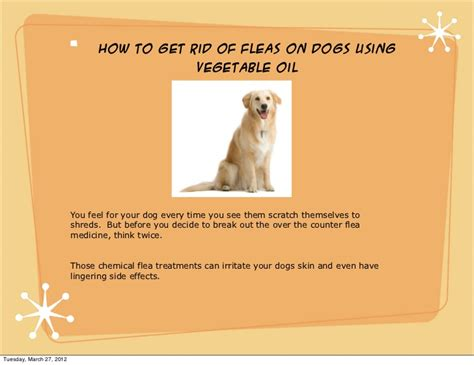 how to get rid of fleas on how to get rid of fleas on dogs